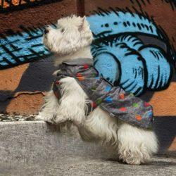 Camon Tolosa - vízlepergetős fleece bélelt kabát