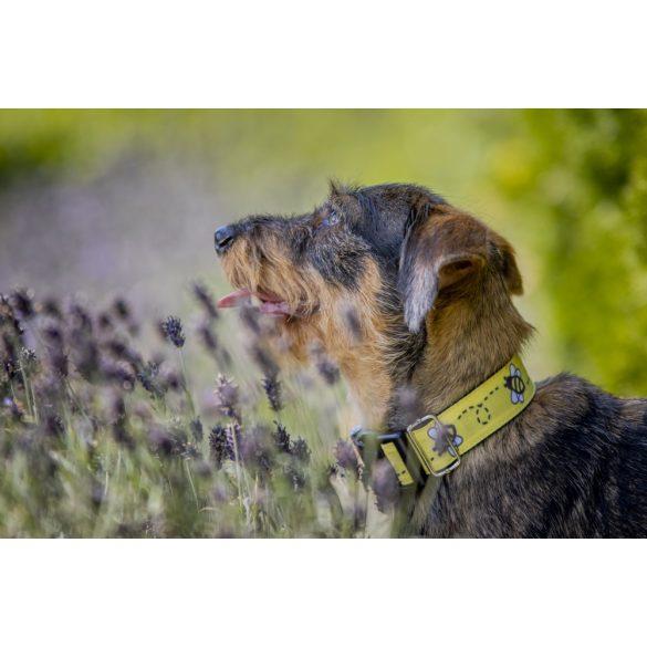 Delight's Dog Design méhecskés nyakörv