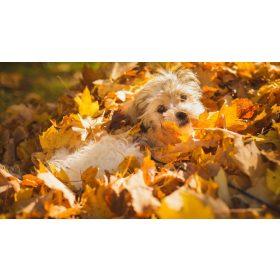 Őszi termékek, kirándulások, hűvősebb napok